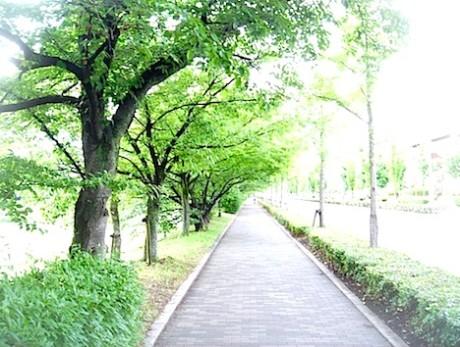 face_2014_07_03_greenroad